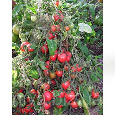 Садовая жемчужина семена томата черри Satimex 10 г