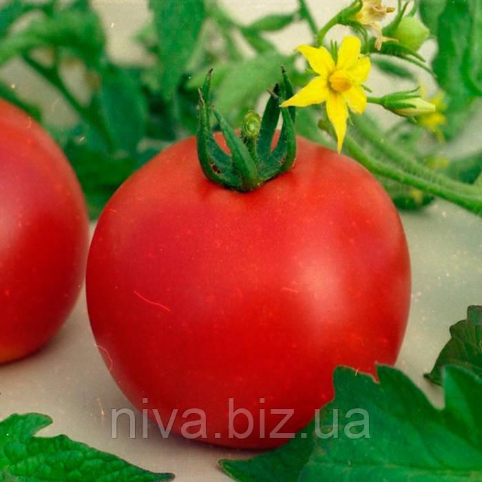 Банзай семена томата дет Элитный Ряд 1 г