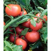 Пинк Свитнес F1 семена томата дет. Lark Seeds 100 семян