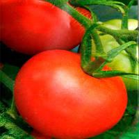 Куманёк F1 семена томата дет. Элитный Ряд 1 г