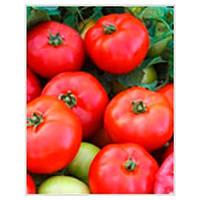 Мармара F1 семена томата дет. Yuksel 1 000 семян
