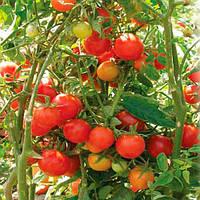 Флорида F1 (Florida F1) семена томата дет. Seminis 1 000 семян