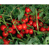 7204 F1 семена томата дет. Heinz/Lark Seeds 5 000 семян
