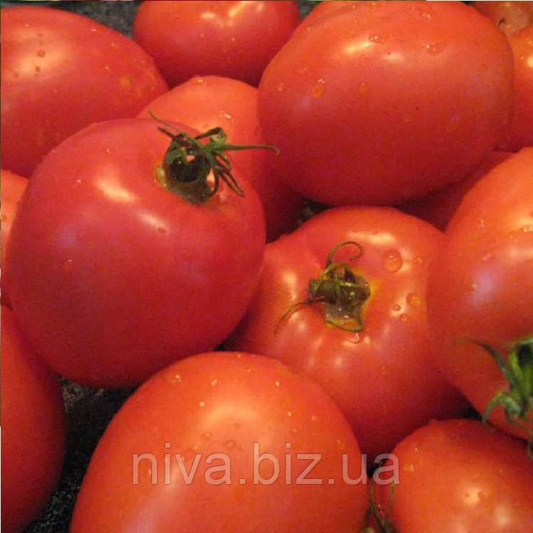 Немадор семена томата дет.  SAIS 10 г