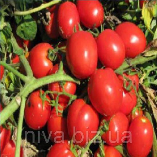 Реди F1 семена томата дет. ESASEM 1 000 семян