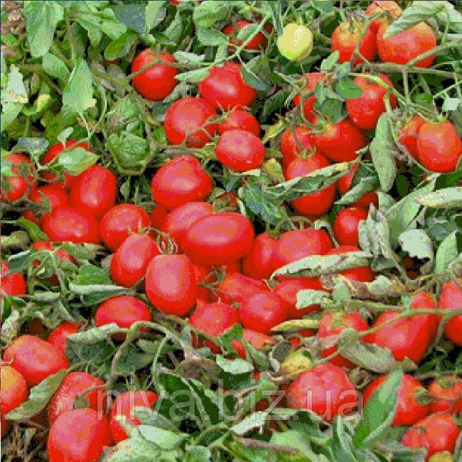 Эдвайзер F1 семена томата дет. ESASEM 1 000 семян