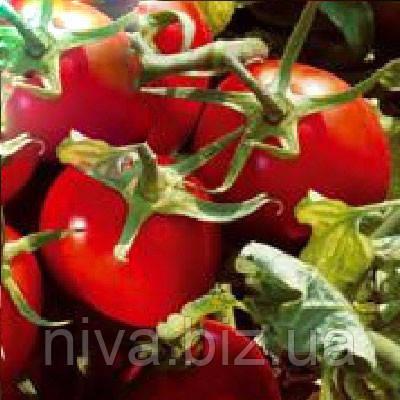 Подиум F1 семена томата дет. ESASEM 1 000 семян
