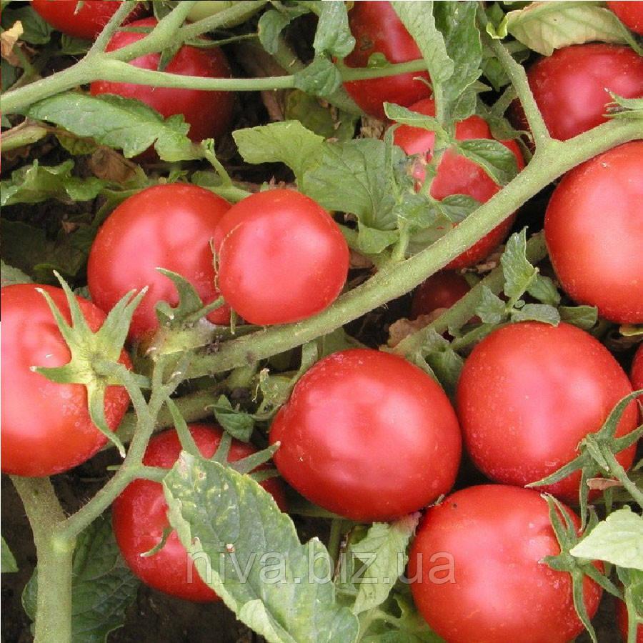 Тритонекс семена томата дет.  Semo 10 000 семян
