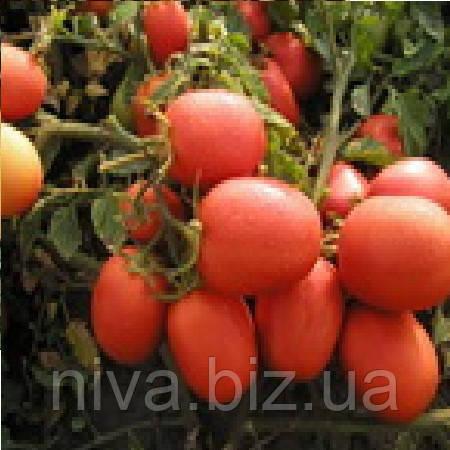 Семалейт F1 семена томата Semo 1 000 семян