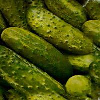 Авелла F1 семена огурца партенокарпического NongWoo Bio 1 000 семян