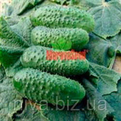 Алгамбра F1 семена огурца партенокарпического Moravoseed 1 000 г