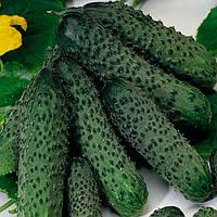 Пасалимо F1 семена огурцов партенокарпического Syngenta 100 сем