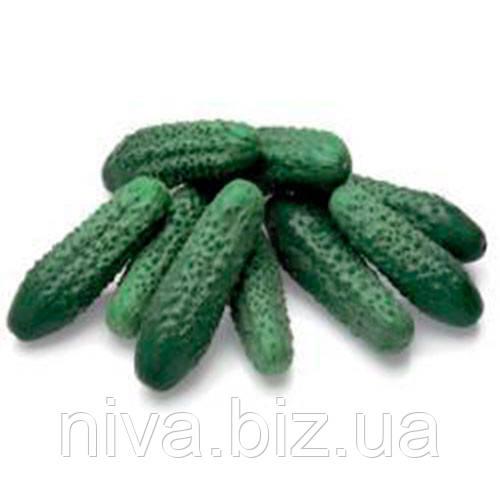 Престо F1 (Presto F1) семена огурца корнишона партенркарпического Rijk Zwaan 1 000 семян