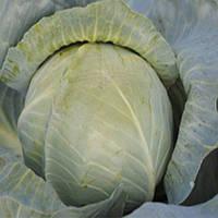 Аскания F1 семена капусты б/к средне-поздней Lucky Seed 1 000 сем