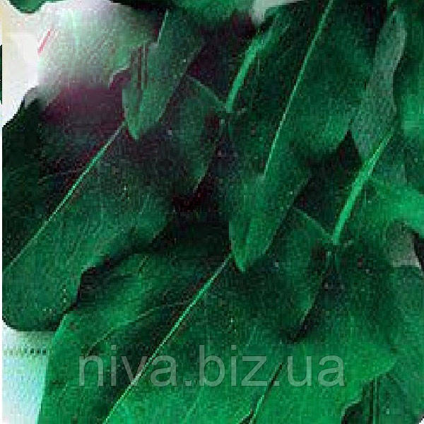 Широколистный семена щавля Moravoseed 1 000 г