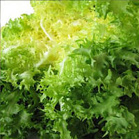 Валоне семена салата тип Фризе/Эндивий Euroseed 50 г