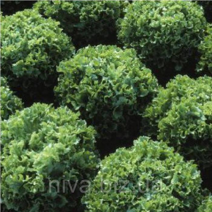 Фристина семена салата тип Фризе Hazera 5 г