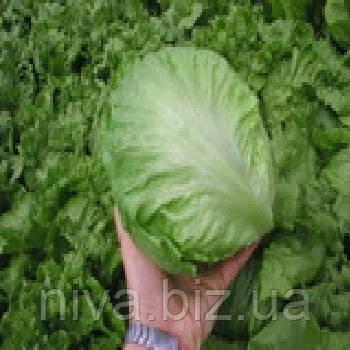 Максимо семена салата тип Айсберг Semo 5 000 семян