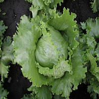 Медимо семена салата тип Айсберг Semo 5 000 семян