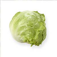Платинас (Platinas) семена салата Айсберг Rijk Zwaan 1 000 драже