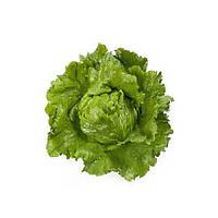 Сантаринас (Platinas) семена салата Айсберг Rijk Zwaan 1 000 драже