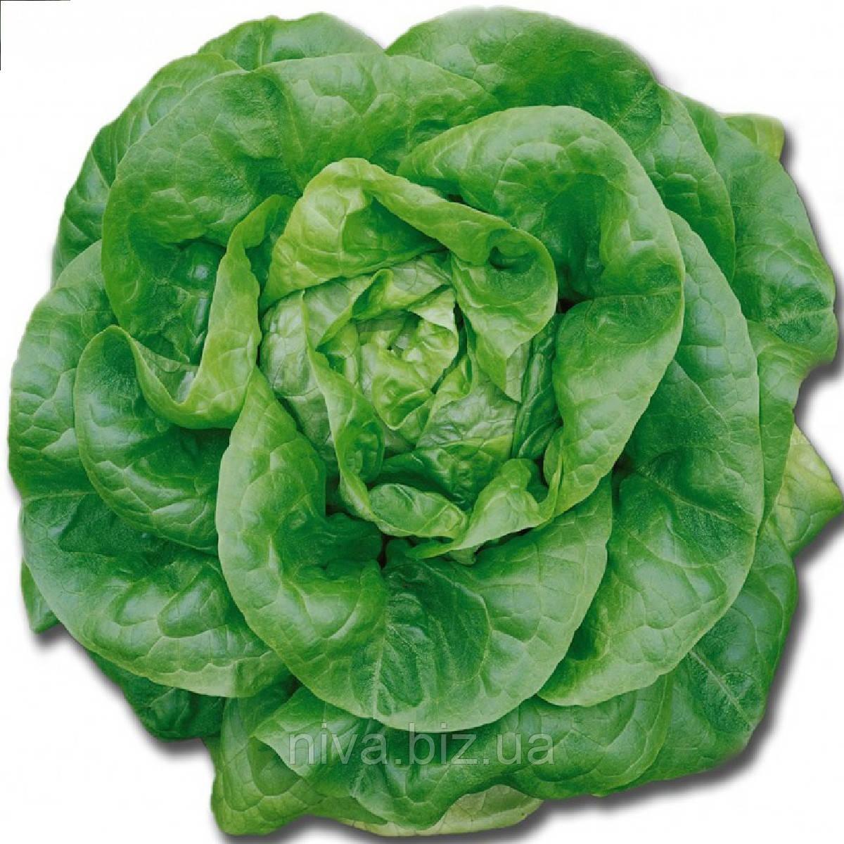 Мона семена салата Кочанного типа Euroseed 50 г