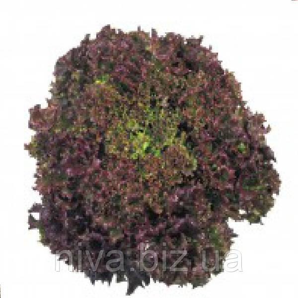 Кримсон семена салата  Лолло Роса Moravoseed 1 000 г