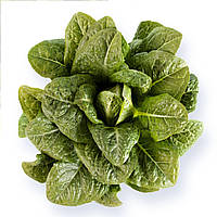 Авона (Auvona) семена салата типа Ромен Rijk Zwaan 1 000 драже
