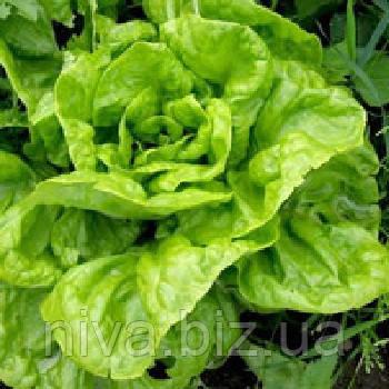 Квинтус (Quintus) семена салата Ромен Rijk Zwaan 1 000 драже