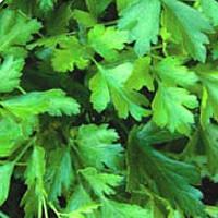 Гиганте де Италия семена петрушки листовой Hem Zaden 100 г