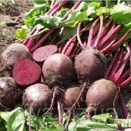 Боро F1 (Boro F1) насіння буряка столового округлого середньостиглого 110-115 днів Bejo 5 000 насінин