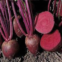 Детройт Дарк Ред насіння буряка столового округлого середньостиглого 75-80 днів Lark Seeds 400 г