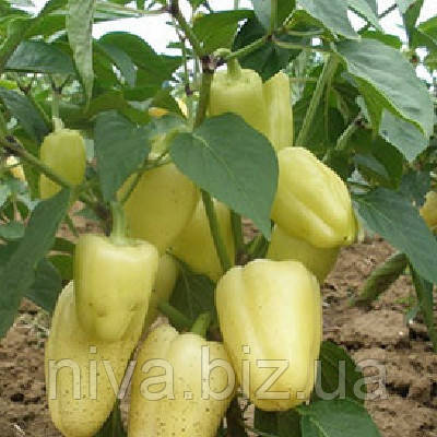 Амика F1 семена перца сладкого  Semo 1 000 семян