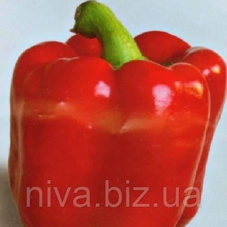 Квадрато Асти красный семена перца сладкого SAIS 10 г