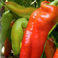 Красный Рог семена перца сладкого Элитный Ряд 2 г