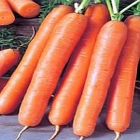 Анета F1 семена моркови сортотип нантская Moravoseed 1 000 г