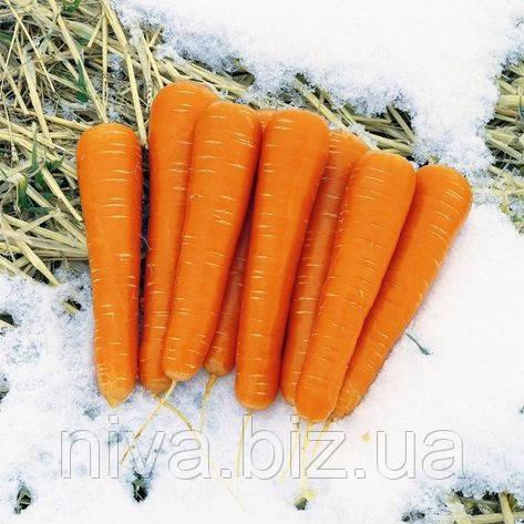 Майор F1 семена моркови сортотип Нантская Clause 25 000 семян