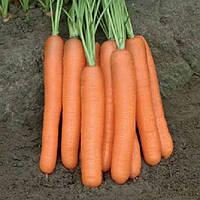 Морелия F1 (Morelia F1) семена моркови Нантес от 1,6 мм  Rijk Zwaan 25 000 семян