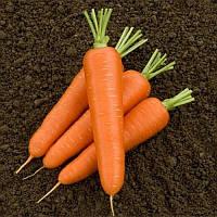 Олимпо F1 семена моркови Шантане Vilmorin 100 000 семян