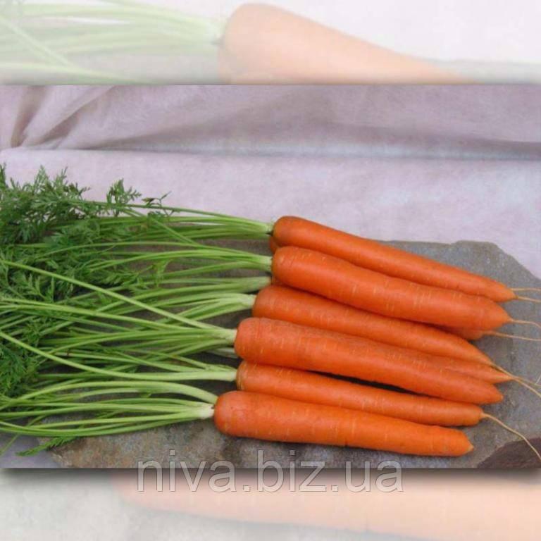 Саманта F1 морковь сортотип Sakata 25 000 семян