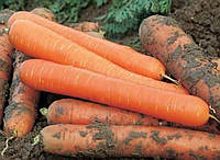 Чемпион F1 семена моркови нантской Syngenta 100 000 семян