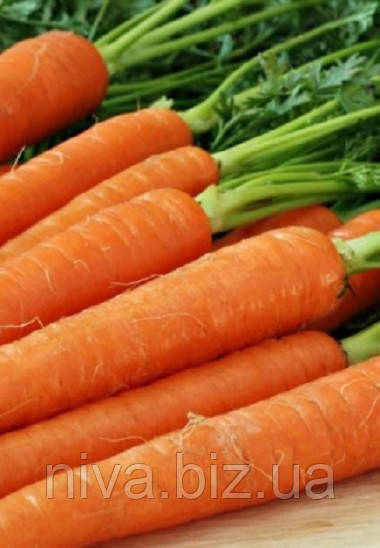 Тина F1 семена моркови Нантская Agri Saaten 25 000 семян