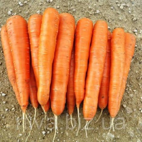 Элеганс F1 семена моркови Нантской прайм. 1,6-1,8 мм Nunhems 100 000 семян