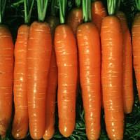 Рубина семена моркови тип Берликум Semo 500 г