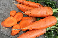 Корина семена моркови Нантес/Шантанэ Moravoseed 1 000 г