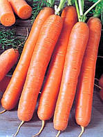 Ройал Форто (Royal Forto) cемена моркови Seminis 100 г