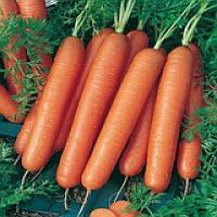 Смирна семена моркови Semo 500 г