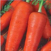 Талисман (Катрин) семена моркови Шантанэ Moravoseed 1 000 г