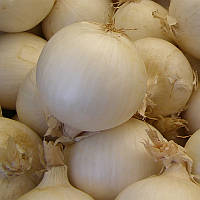 Хиело Hielo семена лука озимого белого Bejo 250 000 сем