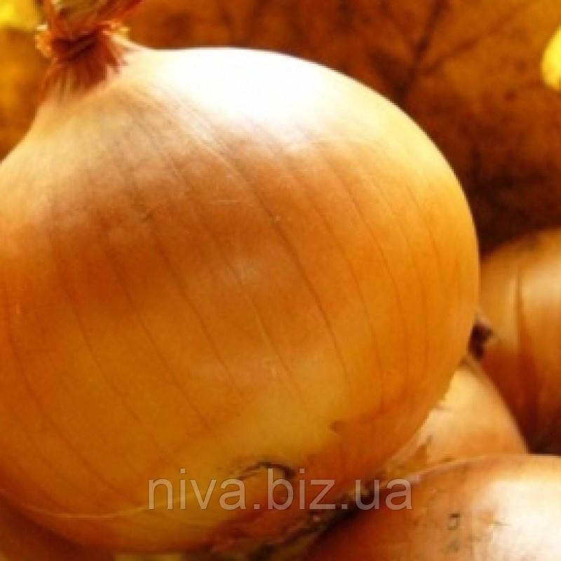 Шилотон F1 насіння цибулі озимої до 275 днів Agri Saaten 50 000 насінин